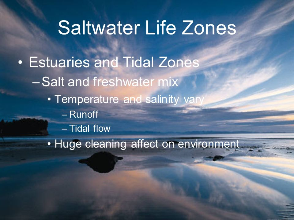 Saltwater Life Zones Estuaries and Tidal Zones Salt and freshwater mix
