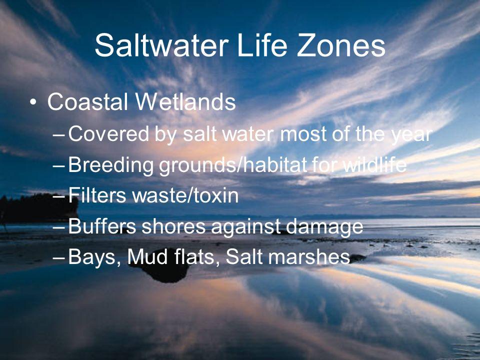 Saltwater Life Zones Coastal Wetlands