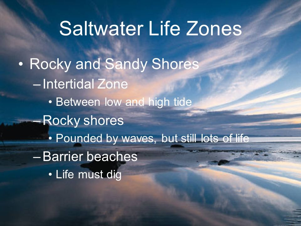 Saltwater Life Zones Rocky and Sandy Shores Intertidal Zone