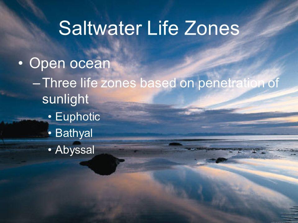 Saltwater Life Zones Open ocean