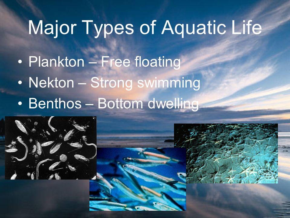 Major Types of Aquatic Life