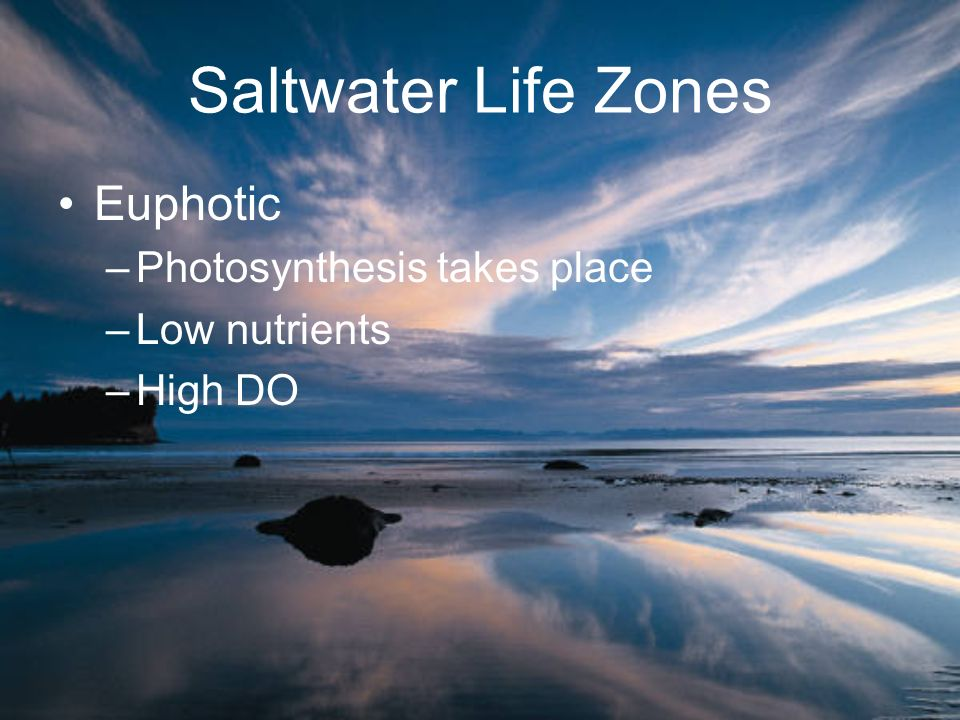 Saltwater Life Zones Euphotic Photosynthesis takes place Low nutrients