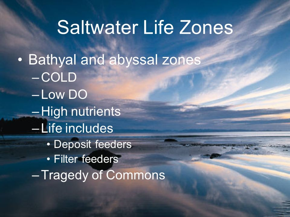 Saltwater Life Zones Bathyal and abyssal zones COLD Low DO