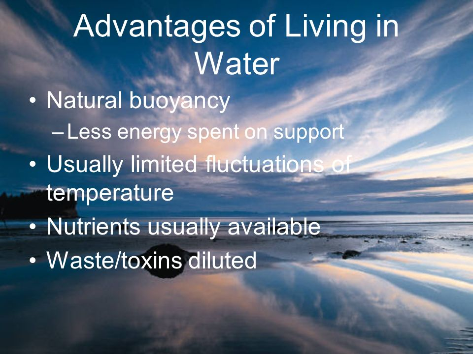 Advantages of Living in Water