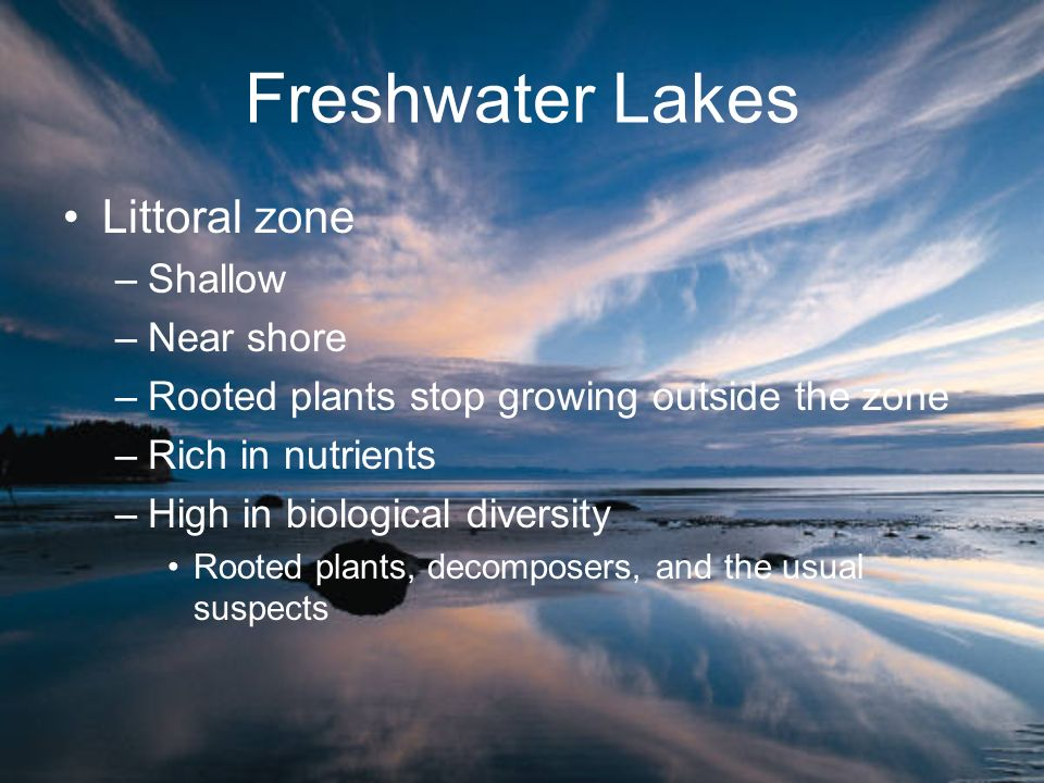 Freshwater Lakes Littoral zone Shallow Near shore