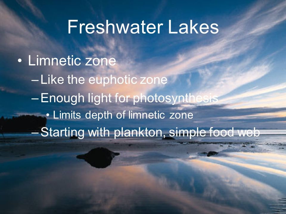 Freshwater Lakes Limnetic zone Like the euphotic zone