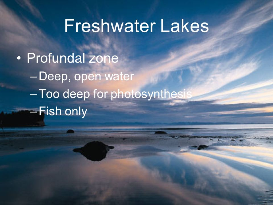 Freshwater Lakes Profundal zone Deep, open water