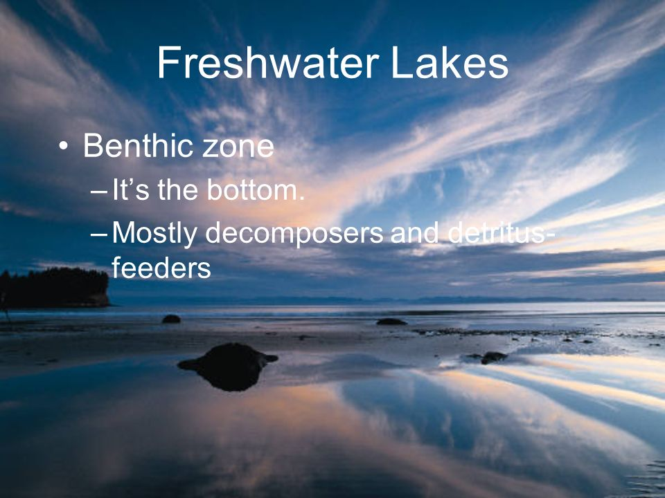 Freshwater Lakes Benthic zone It's the bottom.