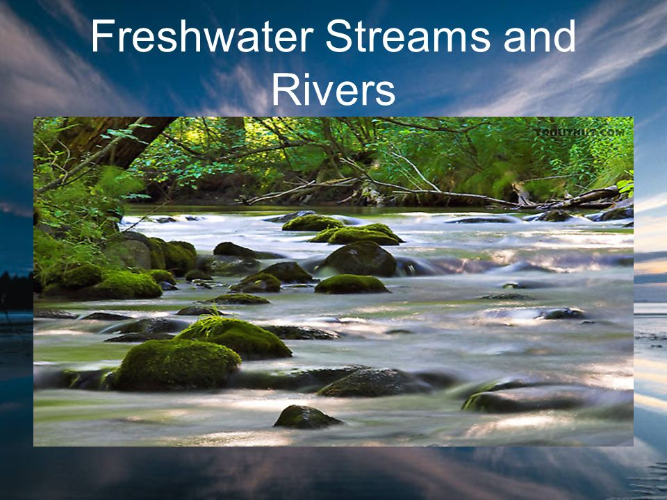 Freshwater Streams and Rivers