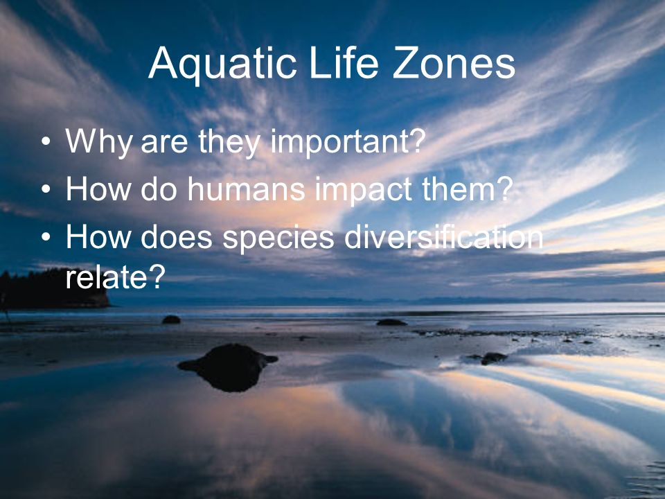 Aquatic Life Zones Why are they important How do humans impact them
