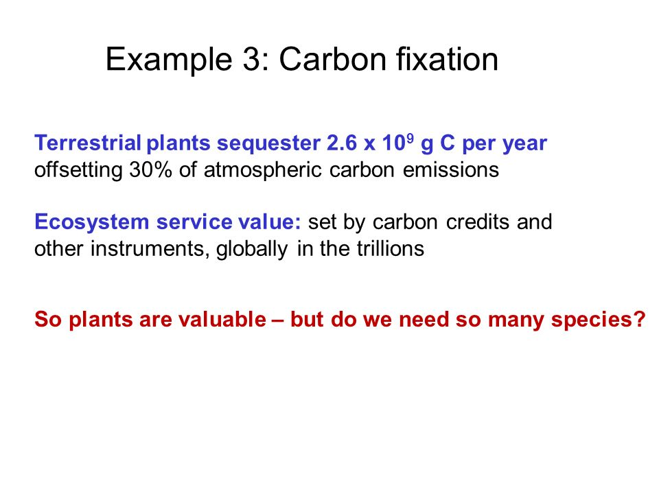 Example 3: Carbon fixation