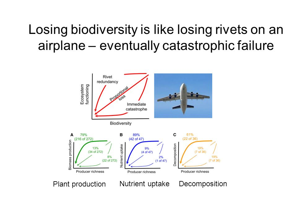 Losing biodiversity is like losing rivets on an airplane – eventually catastrophic failure