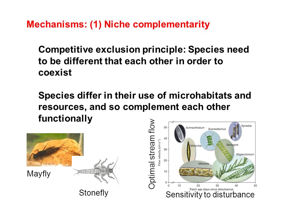Mechanisms: (1) Niche complementarity