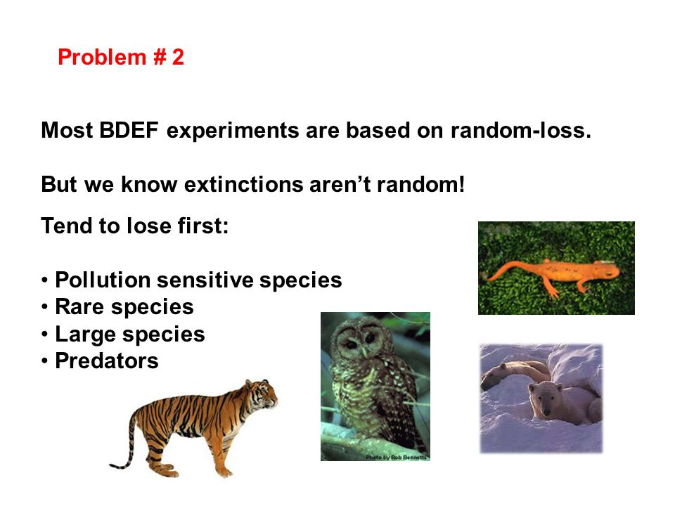 Problem # 2 Most BDEF experiments are based on random-loss. But we know extinctions aren't random!