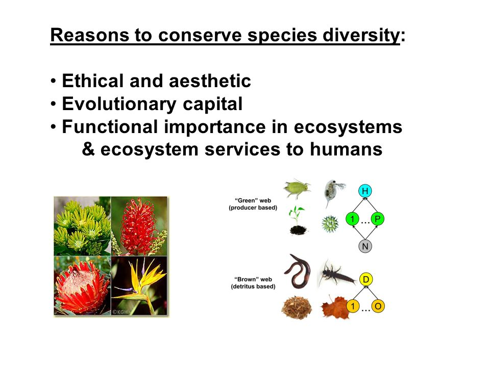 Reasons to conserve species diversity: