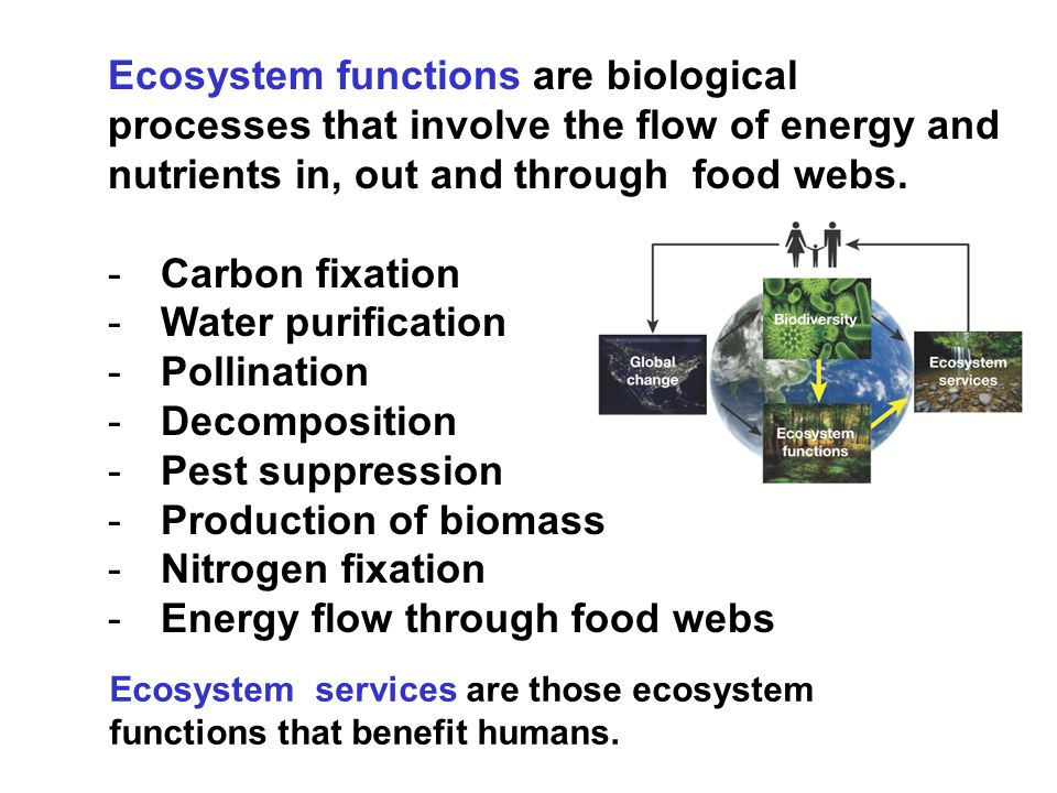 Energy flow through food webs