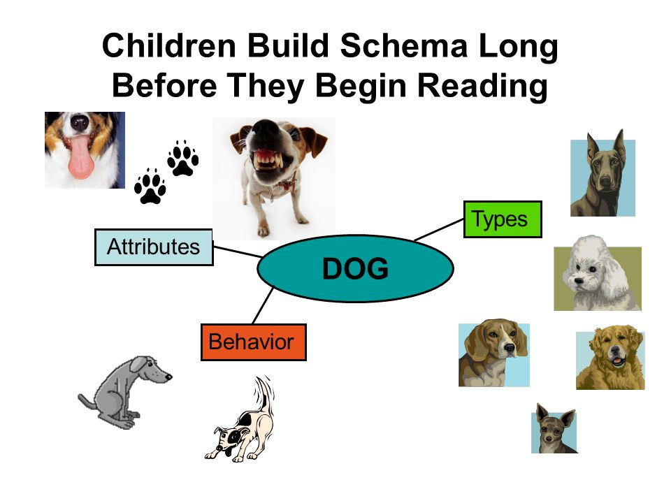 Children Build Schema Long Before They Begin Reading