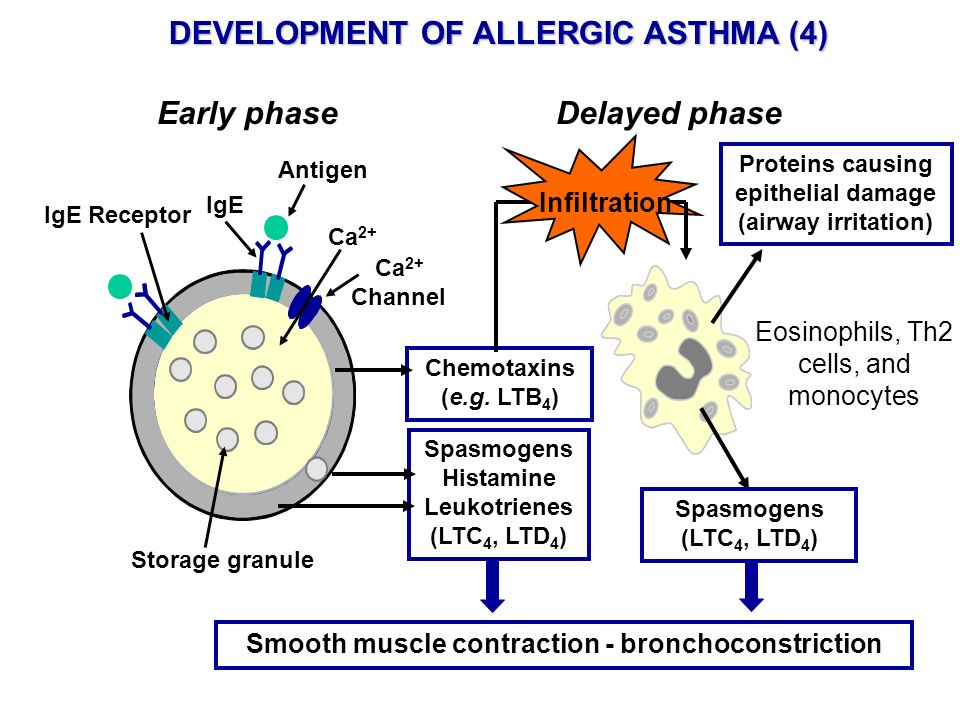 DEVELOPMENT OF ALLERGIC ASTHMA (4)