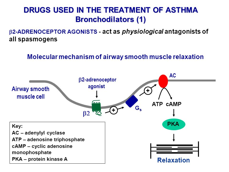 DRUGS USED IN THE TREATMENT OF ASTHMA Bronchodilators (1)