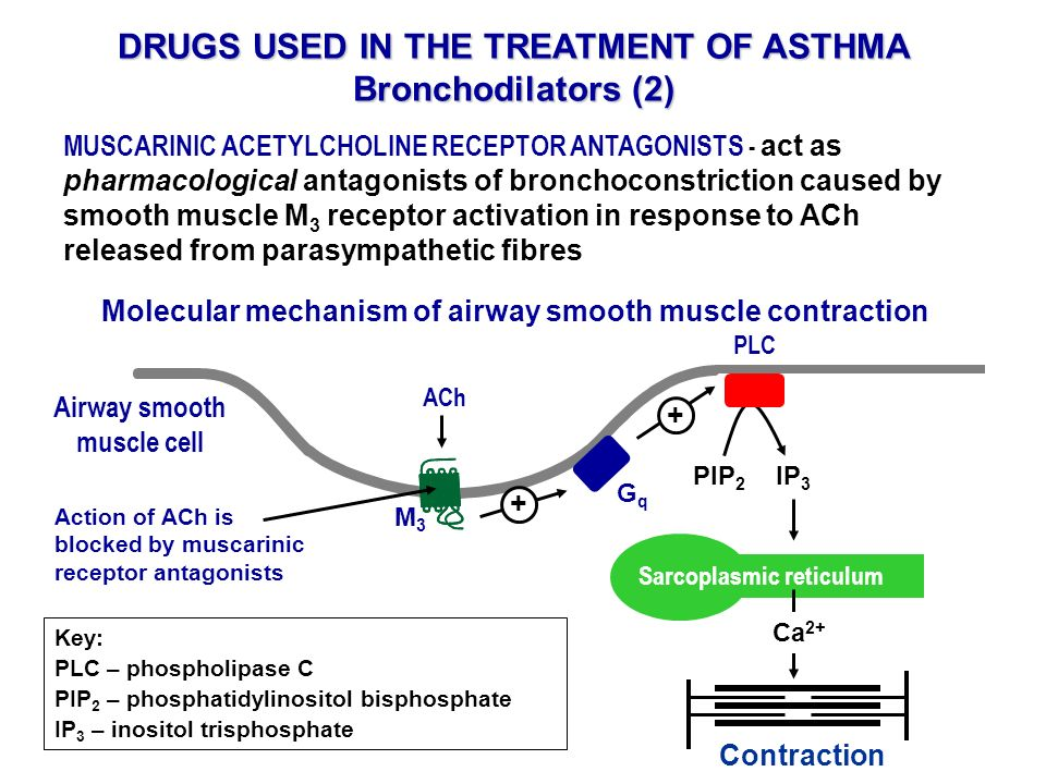 DRUGS USED IN THE TREATMENT OF ASTHMA Bronchodilators (2)