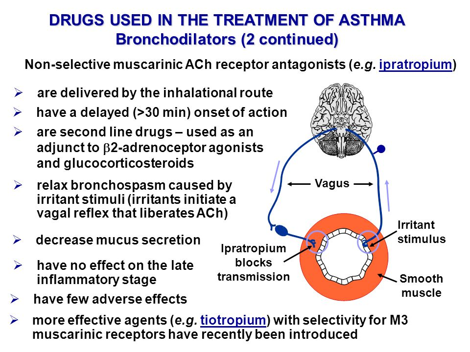 DRUGS USED IN THE TREATMENT OF ASTHMA Bronchodilators (2 continued)
