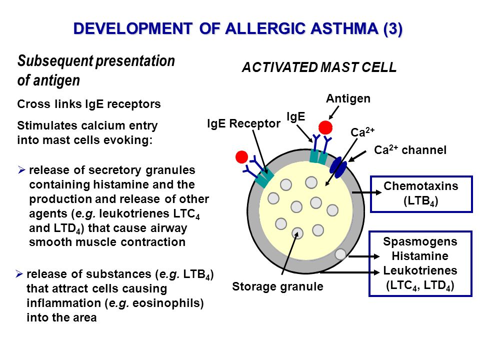 DEVELOPMENT OF ALLERGIC ASTHMA (3)