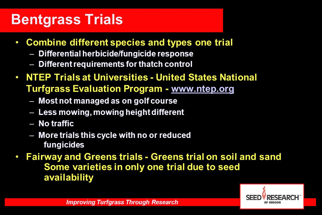 Bentgrass Trials Combine different species and types one trial