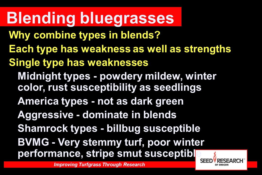 Blending bluegrasses Why combine types in blends