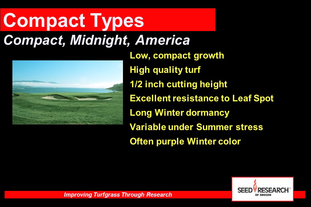 Compact Types Compact, Midnight, America