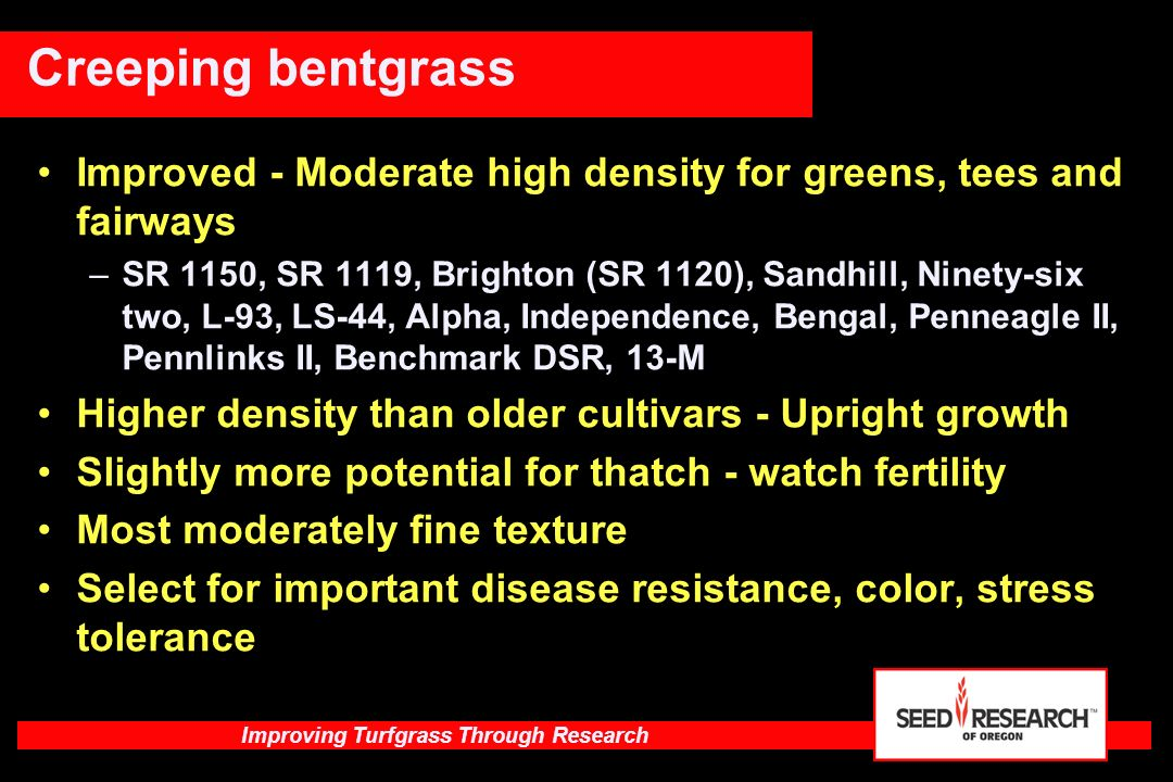 Creeping bentgrass Improved - Moderate high density for greens, tees and fairways.