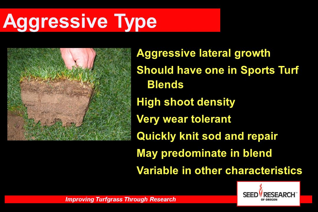 Aggressive Type Aggressive lateral growth