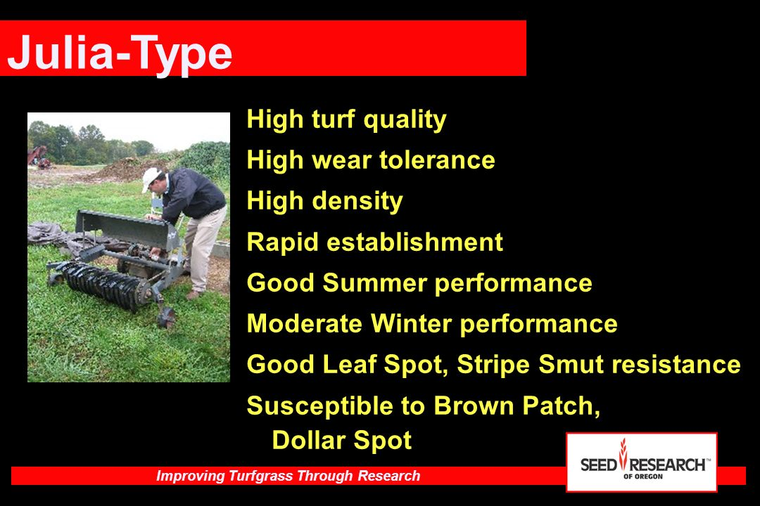 Julia-Type High turf quality High wear tolerance High density