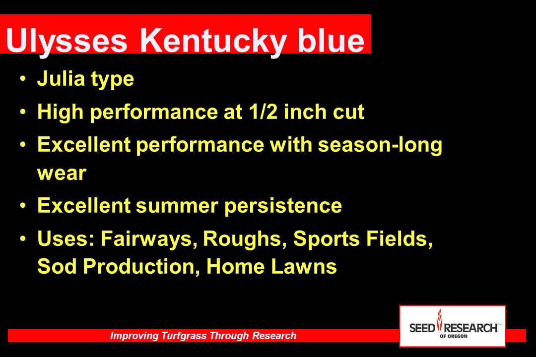 Ulysses Kentucky blue Julia type High performance at 1/2 inch cut