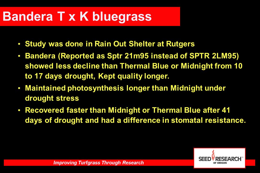 Bandera T x K bluegrass Study was done in Rain Out Shelter at Rutgers