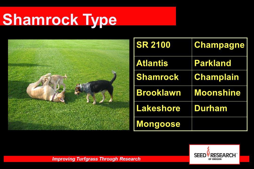 Shamrock Type SR 2100 Champagne Atlantis Parkland Shamrock Champlain