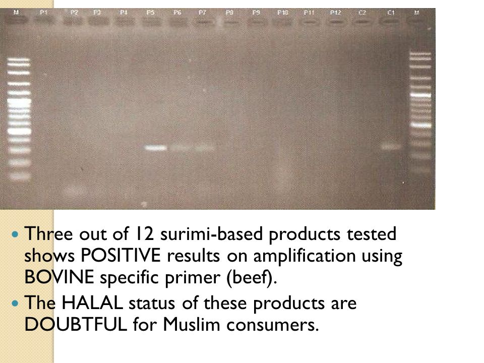 Three out of 12 surimi-based products tested shows POSITIVE results on amplification using BOVINE specific primer (beef).
