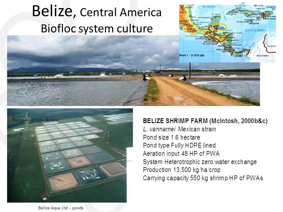 Belize, Central America Biofloc system culture