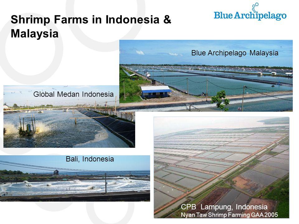 Shrimp Farms in Indonesia & Malaysia