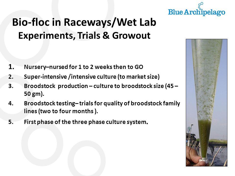 Bio-floc in Raceways/Wet Lab Experiments, Trials & Growout
