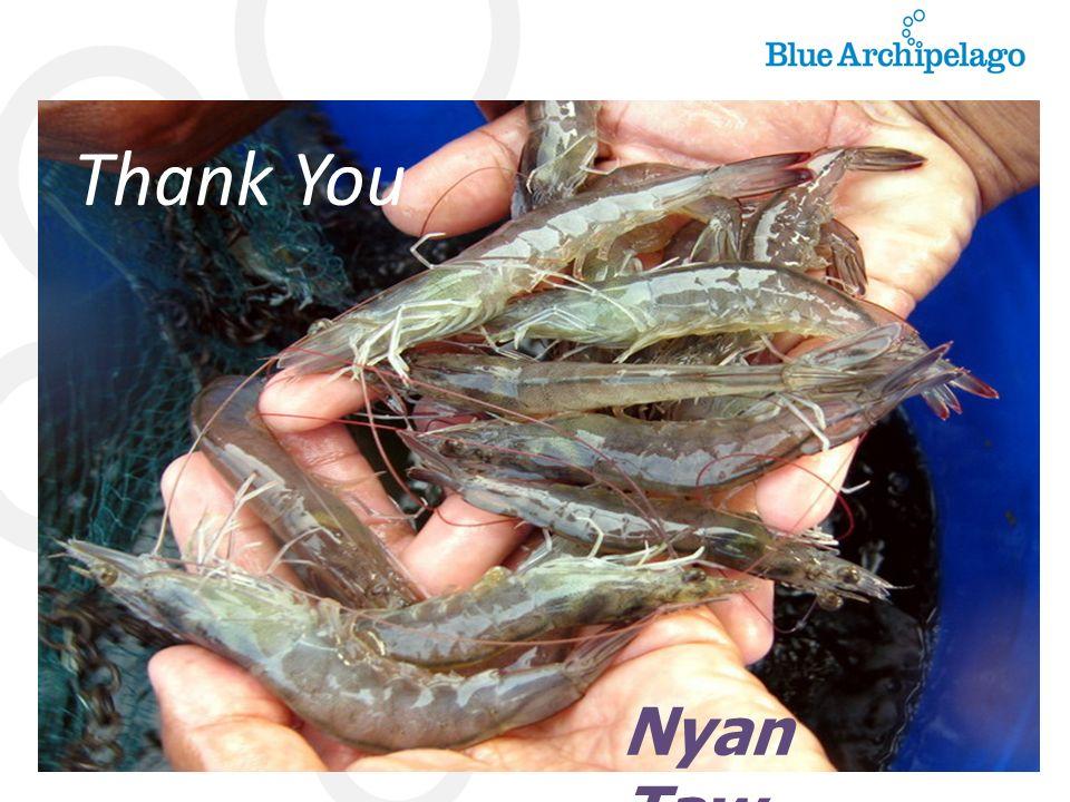 Thank You Nyan Taw