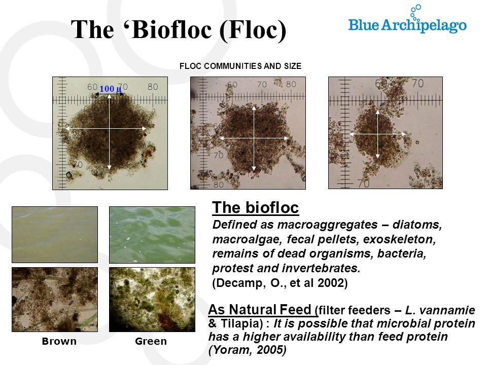 The 'Biofloc (Floc) The biofloc