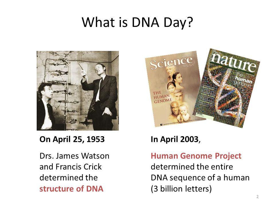 What is DNA Day SLIDE 1: What is DNA Day DNA Day is April 25th because: Watson and Crick determined structure of DNA on April 25, 1953.