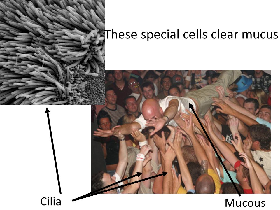 These special cells clear mucus