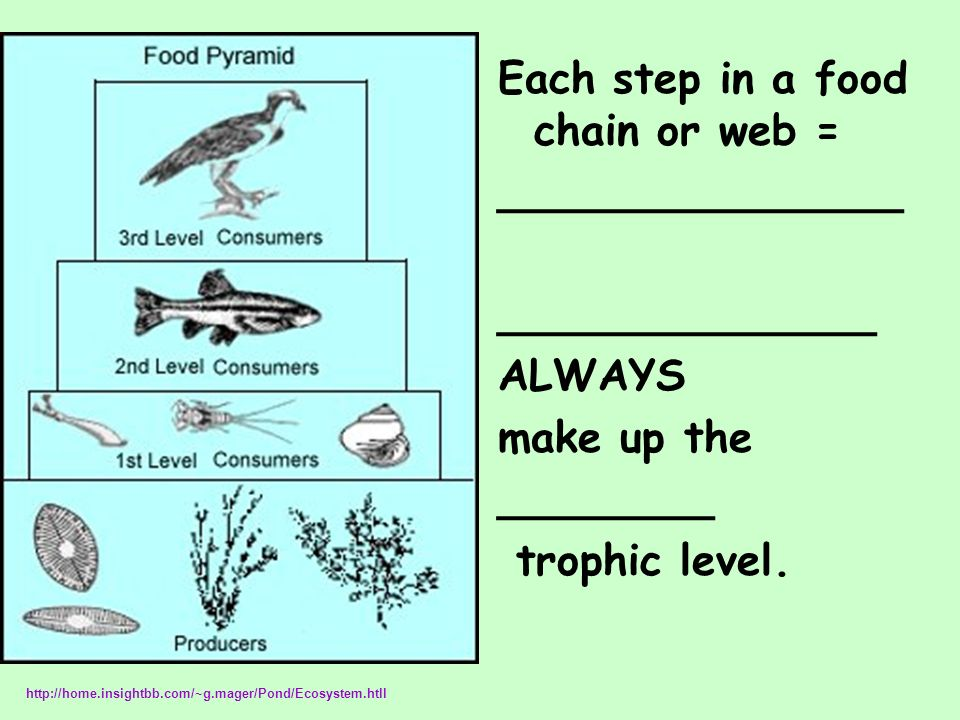 Each step in a food chain or web = _______________ ______________