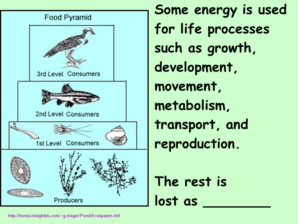 Some energy is used for life processes such as growth, development,