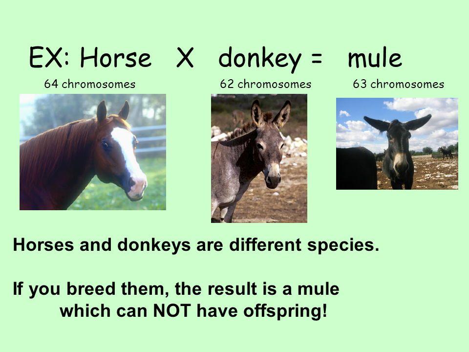 EX: Horse X donkey = mule
