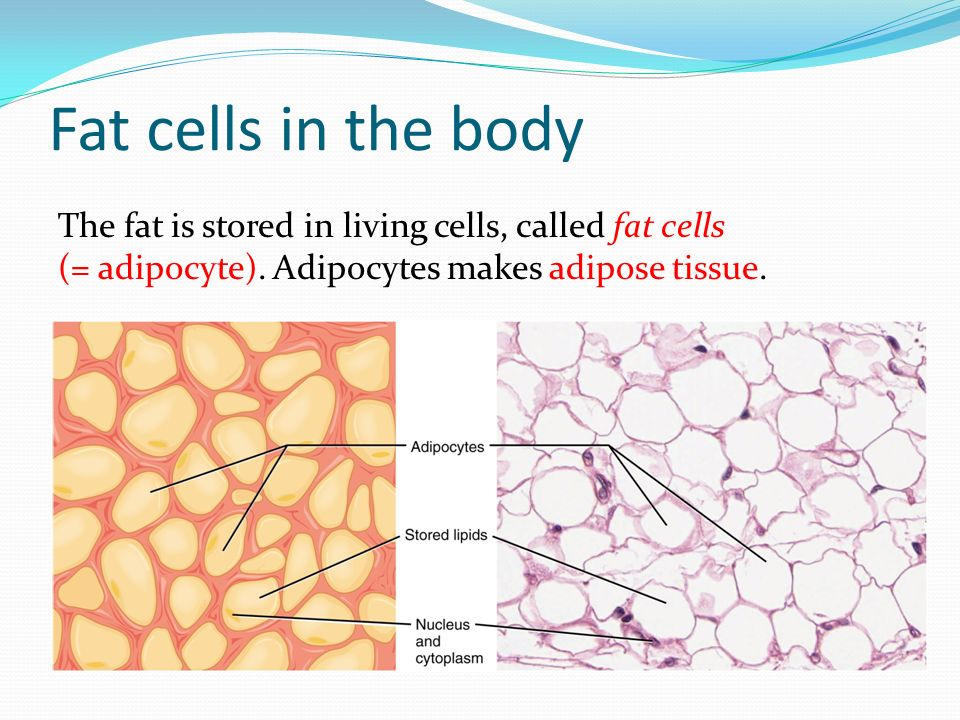 Fat cells in the body The fat is stored in living cells, called fat cells (= adipocyte).