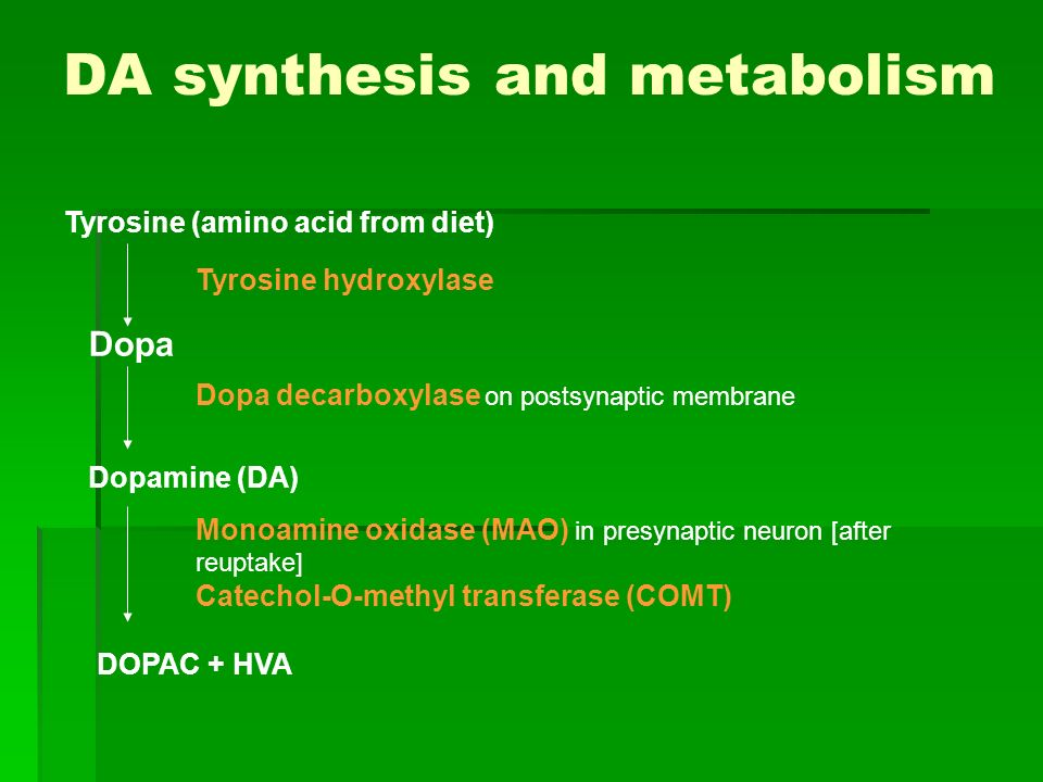 DA synthesis and metabolism