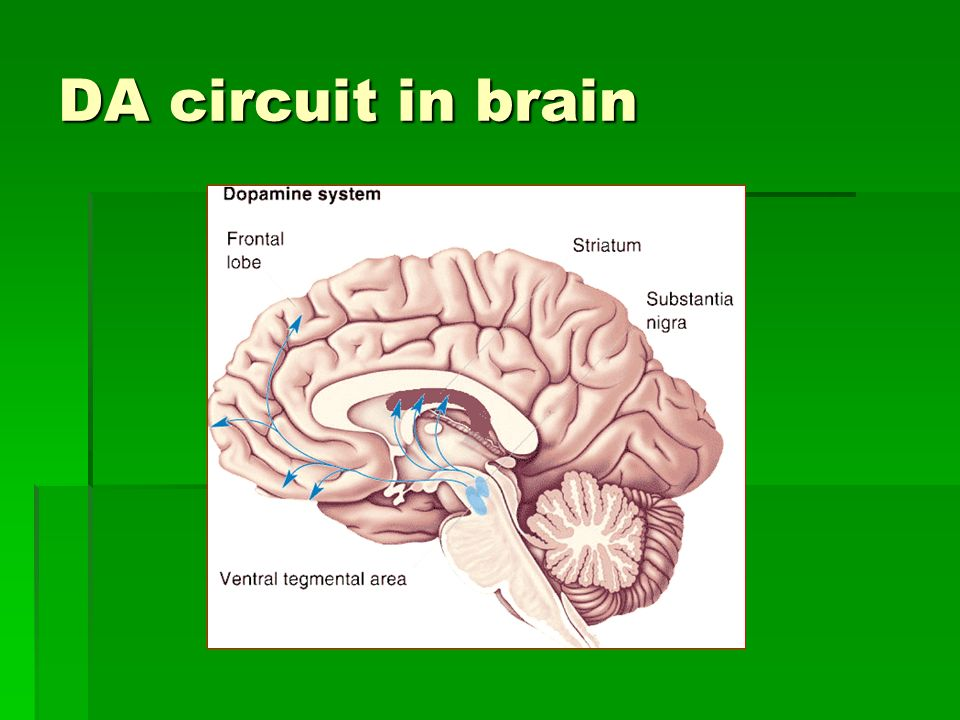 DA circuit in brain