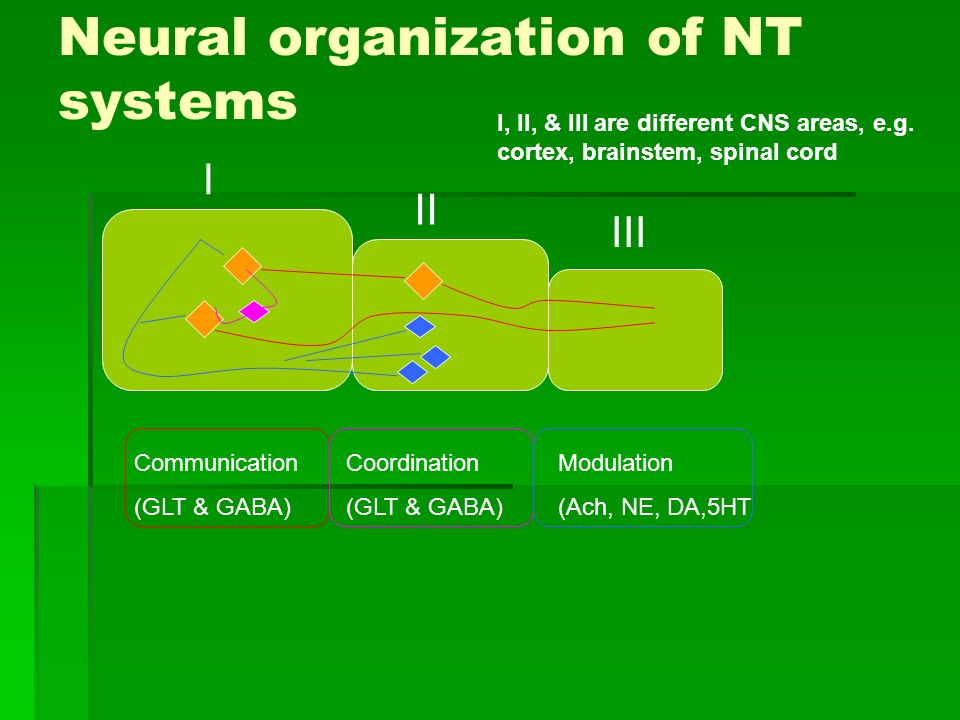 Neural organization of NT systems